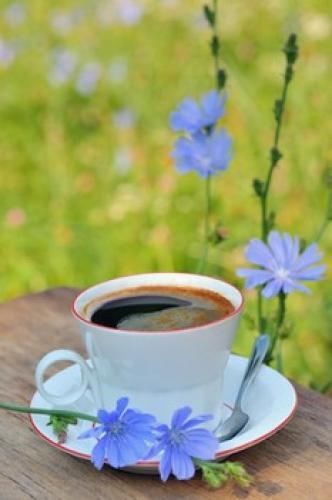 Часть цикория порошка к добавлению к натуральному кофе